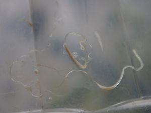 Snail Porn ou petit traité de l'amour et de la sexualité chez les escargots