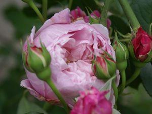 Une rose, un jour : Spirit of freedom