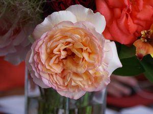 Une rose, un jour : Alphonse Daudet