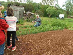 .Puis nous avons vu les poireaux à ramasser pour la cantine, les pieds de haricots qui poussent, les salades et le carré de topinambours.