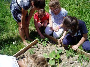 Le jardin des CM2. D'autres photos