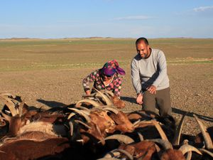 Mongolian pieces of life in the Gobi - Part 2