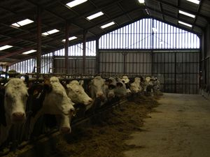 La génétique au cœur des pratiques de l'élevage