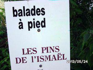"""Vendredi matin balade """"Aux Pins de L'Ismaël"""" soit 10 km. 7° matin, 13° aprem.19 marcheurs le matin, un peu moins l'aprem."""