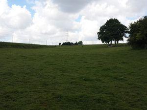 Une prairie paisible en pente avec un ruisselet dans sa partie la plus basse dans lequel viennent patauger les vaches