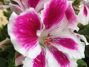 Cliquez sur mes pétales...et la fleur s'ouvrira.
