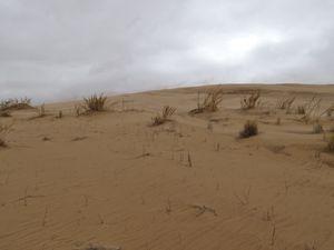 Après 50 km de route, commence la piste qui remonte le Namib Naukluft, nous la suivons toute la journée