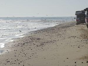 Les dunes, la plage, les dunes à nouveau..Au passage, un cimetière de baleine, témoin de leur pêche au siècle dernier....