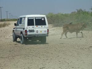 poussière et animaux...garder ses distances et se prévenir par radio...