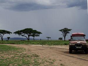 La météo orageuse du Serengueti, de jolis paysages bien verts !