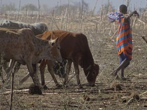 Ngorongoro dans le brouillard et Masaï rôdés à la vente de leur image...