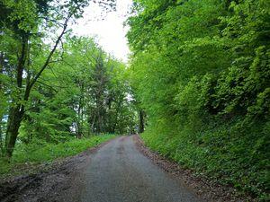 Mai 2017 - Route forestière de Collonges