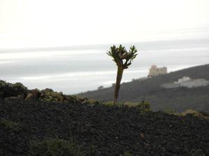 Vues sur les terres depuis le Mirador