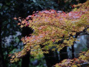 Osaka - Minoh 18 novembre 2014
