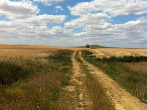 A travers champs avec les moissoneuses et les cigognes
