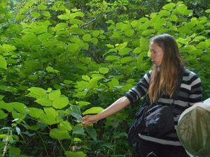 Le Moulin des Fougères : un Espace Naturel Sensible à Sidiailles