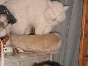 Marraine a trouvé un super joujou pour Idès! Un pied d'arbre à chat qui ne lui sert pas! Idès adore arracher donc il s'éclate!