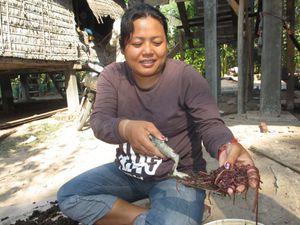 Expérimentation sur le vermi-compostage
