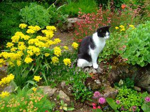 J'ai une admiratrice, qui attend que je rentre pour lui donner à manger...cool! repos au bord de l'eau.  quelle vie de chat!! Au fond, derrière Isy, (photo de droite) ,un autre topiaire taillé en forme d'escaliers