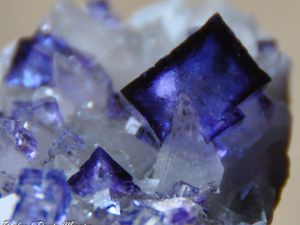Fluorite (Fluorine) with Calcite on Sphalerite from Elmwood Mine, Tennessee, USA (size: Museum)