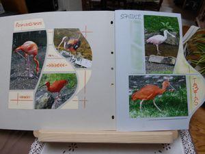 flamants roses et spatules ,ibis