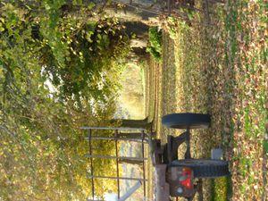 l'automne dans la foret de Maroeuil
