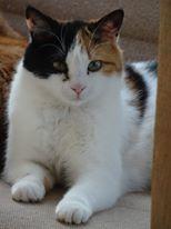 Nos chats à l'adoption