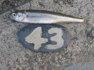 Mon tableau de pêche - Cornish Lure Festival 2015