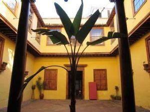 L'arbre dragon, quelques demeures
