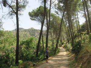 Départ de la randonnée vers l'entrée d'El Caminato et au passage un renard affamé.