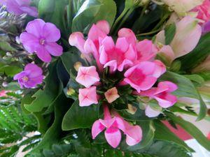 Des Fleurs bien arrivées .....