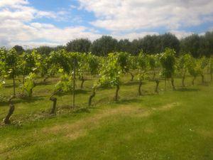Surprise ! Il y a des vignes à Valenciennes et nous pouvons même (!) faire une dégustation !