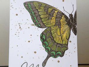 QUOI ? Encore des papillons ???