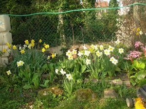 fleurs du jardin pour vous