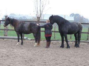Equus Femina Netherlands Novembre 2013