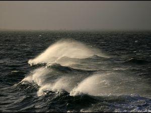 Crinière de mer
