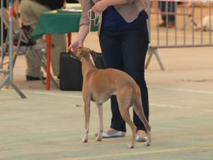 Nevers 2013 - Exposition canine internationale