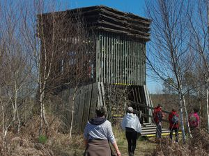 Observatoire constitué d'une tour de bois de 5 mètres de hauteur permettant une vue panoramique sur l'ensemble du marais.