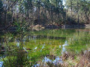Les petits lacs d'Hostens
