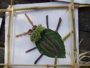 insecte nature