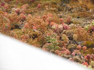 d'autres photos de la toiture végétalisée
