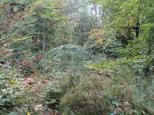 Balade en forêt, couleurs d'automne