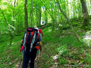 Balade en forêt communale de Chambolle et Curley
