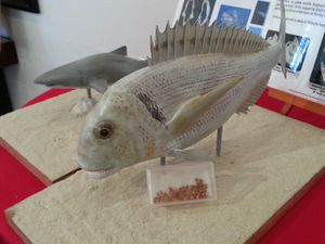 exposition FOSSIL' ART
