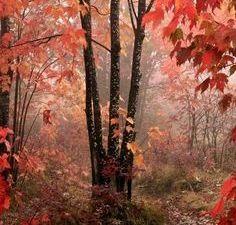 C'est beau quand même l'automne !