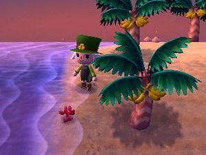 Photo 1 (la plage de votre village), photo 2 (la plage de l'île tropicale).