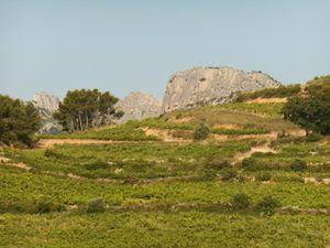 De magnifiques paysages entre Ventoux et Dentelles de Montmirail.