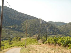 Des vignes en coteaux à perte de vue abritées par les Dentelles et le Ventoux. Col de Suzette.