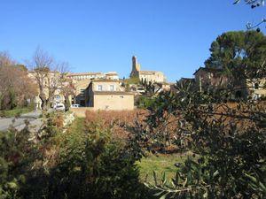 L'Olive avec un grand O comme notre Ventoux Provençal avec un grand V !
