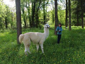 Des activités pour la famille en Franche Comté
